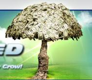 Forex Hacked EA Expert Advisor Test der Urvater aller Grid Trading EA - Bild 1.
